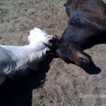 Calming Signals: Yoga Mind/Equine Reality