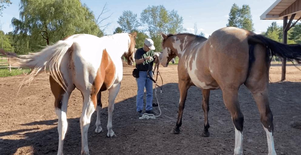 LFB 1: Patti and Crazy Horse